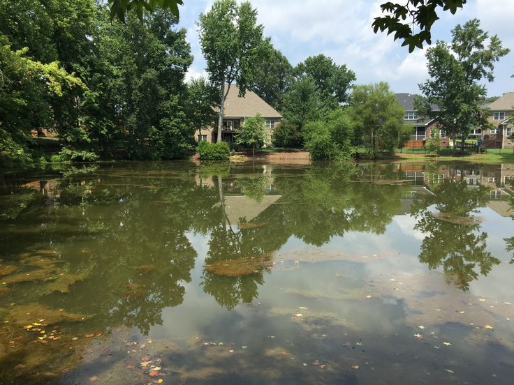 55 best call 704 816 0526 lake management charlotte nc for Large pond maintenance