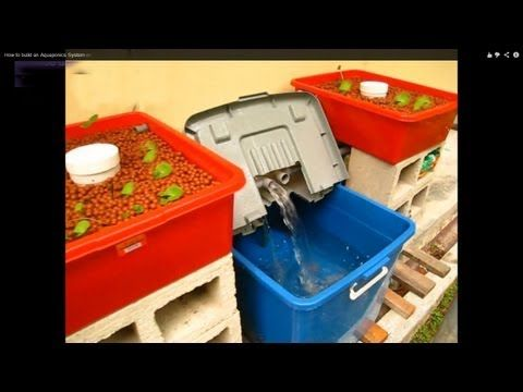 A begginers Guide to building a Home Aquaponic System on a Low Budget