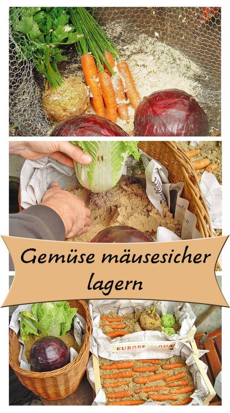 Dein Garten wirft so viel Ernte ab, dass du es nicht sofort essen kannst? Das Gemüse kannst du auch im Keller oder Gartenhaus zwischenlagern. Allerdings solltest du darauf achten, dass Mäuse nicht an das Gemüse kommen können. Wir zeigen, wie man die Ernte mäusesicher lagert.