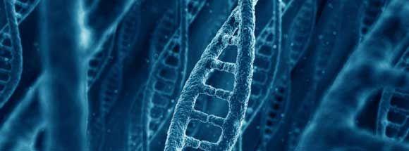 Científicos del Centro de Regulación Genómica CRG, de #Barcelona descubren la #relación entre el #ARN y las proteínas que desencadenan el #Cáncer.