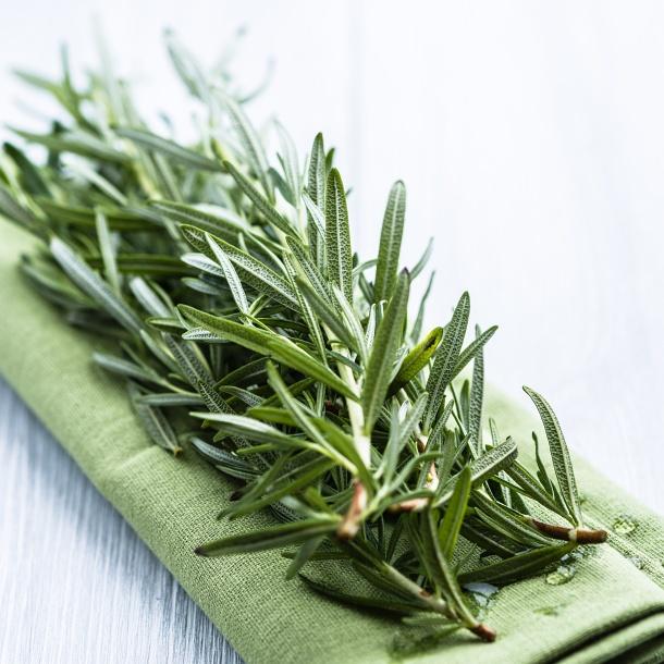 Herbatka rozmarynowa jest polecana także w przypadku przeziębienia, grypy i zmęczenia.
