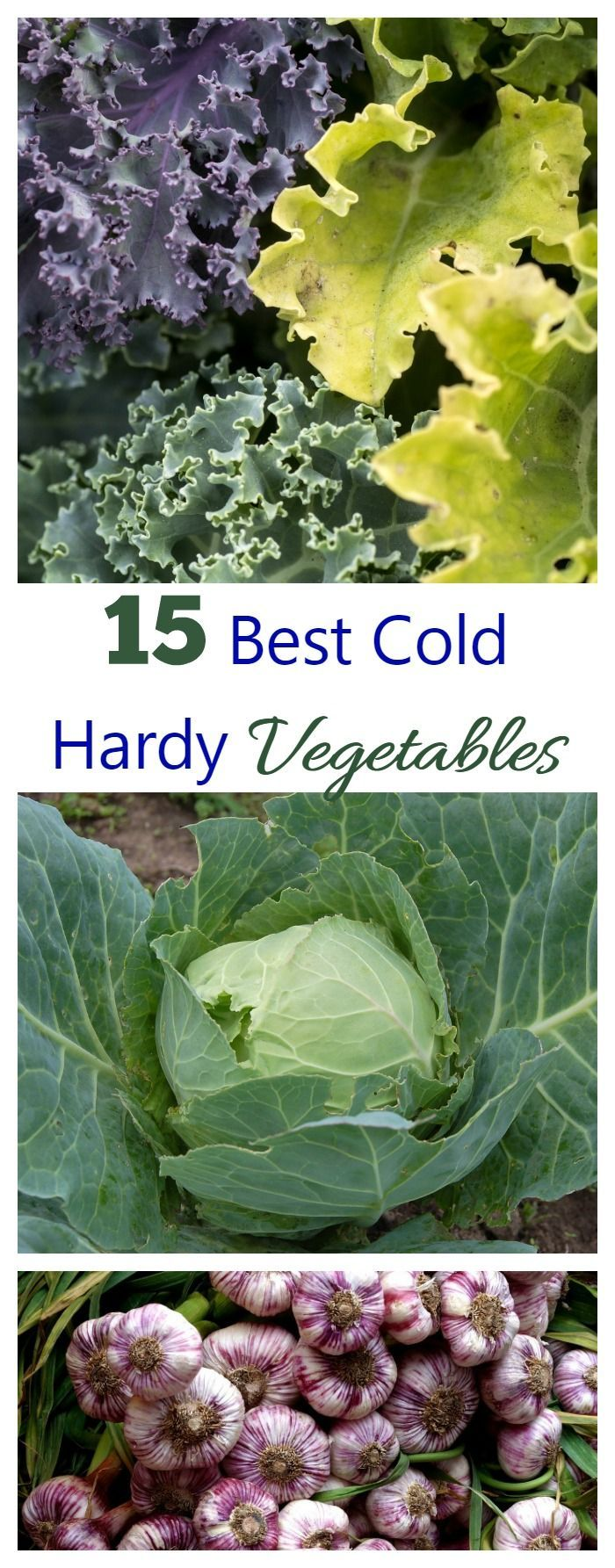 These 15 cold hardy vegetables can take quite cold temperatures. Most do not like to grow in the heat of summer, so they make good spring and fall crops.