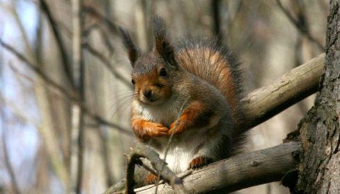 Luontoruutu osa 2: orava