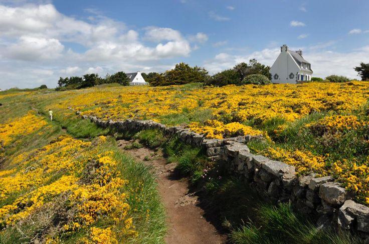 Moëlan-sur-Mer - Ajoncs d'or - Finistère Bretagne
