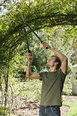 How to Build a Garden Archway With Branches
