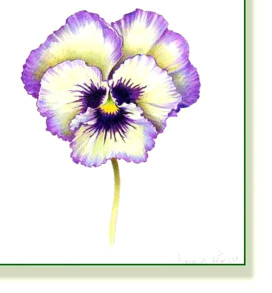 Pencil And Leaf Leaf Of The Day Kmart Pansy In 2020 Pansies Flowers Flower Painting Pansies