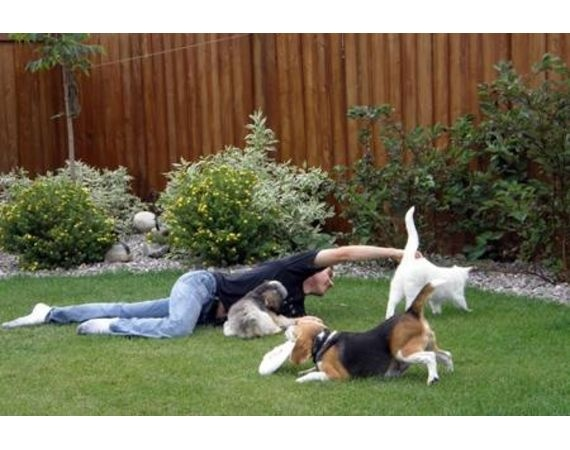 How To Landscape A Backyard For Dogs