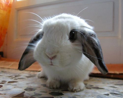 hahah <3: Animal Baby, Funny Bunnies, Bright Eye, Easter Bunnies, Baby Bunnies, Black White, Cute Bunnies, Baby Animal, Big Eye