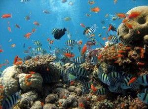 Sharm el-Sheikh víz alatti világa páratlanul gyönyörű a népszerű egyiptomi nyaralóhelyek között. Irány a tenger - találkozzunk Némóval! :)