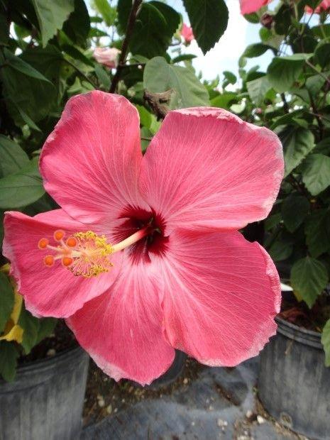 17 Best Ideas About Tropical House Plants On Pinterest