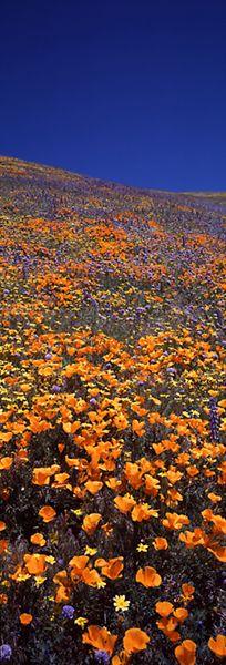 Rebirth of Tehachapi, Tehachapi Mountains, California, Thomas D. Mangelsen