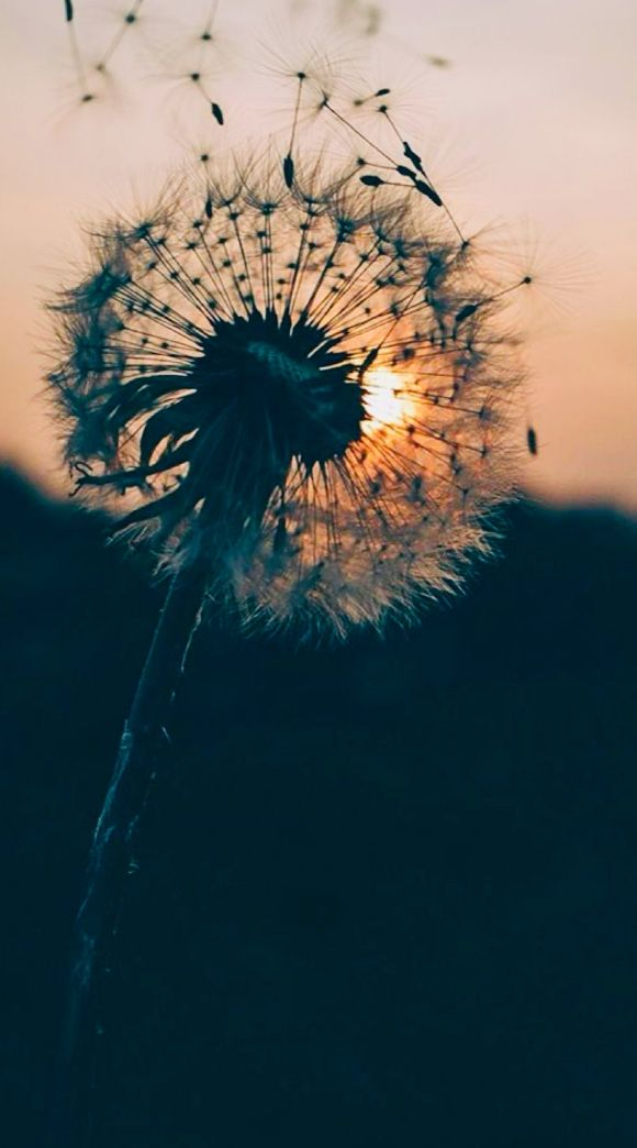 Pin By Kpoplover On Photos Hipster Wallpaper Dandelion Wallpaper 7 Plus Wallpaper