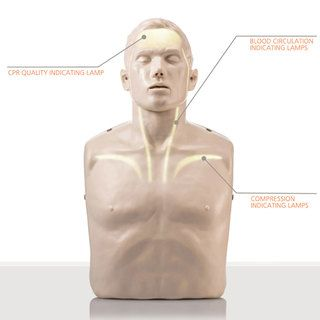 Brayden CPR Manikin - Advanced Model - Single