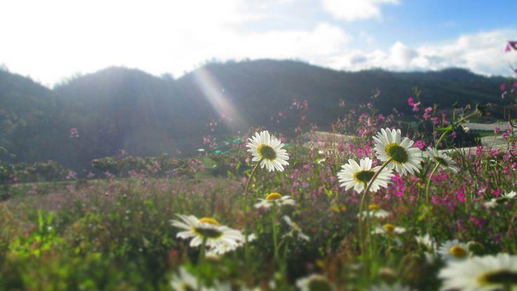 #Flower #Light #Focalzoom #Sibaté