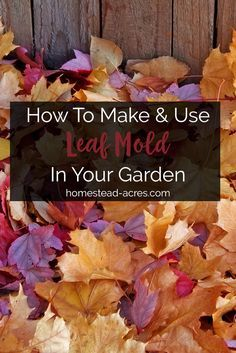 How to make leaf mold. 3 easy ways to make leaf mold and tips for using leaf mold in your garden.  #composting #gardening #homesteading http://www.homestead-acres.com/making-leaf-mold/?utm_campaign=coschedule&utm_source=pinterest&utm_medium=Kim Mills | Homestead Acres | Homeschooling + Homesteading Tips&utm_content=Making Leaf Mold: Tips For How To Make And Use Leaf Mold