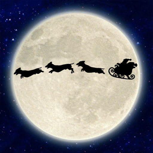 It's a sausage dog Christmas!!!
