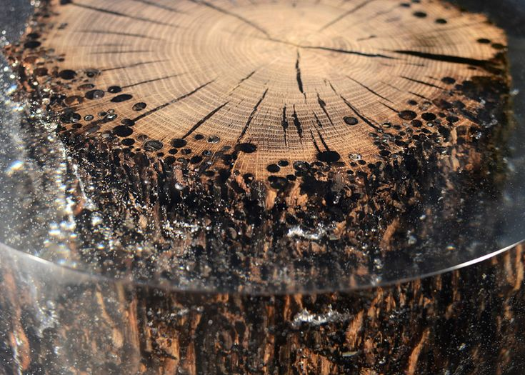 Alcarol traps natural materials in resin to form furniture collection