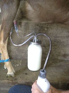 So i have spent hours looking and comparing goat milkers all over the internet and i finally found one i liked. The fruit jar milker- So i looked it up and they want $80. to $100. for this little g…