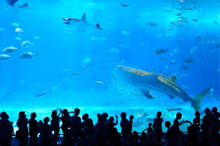 沖縄 美ら海水族 / Okinawa Churaumi Aquarium