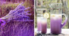 Zázračné vlastnosti levandule a recept na levandulový čaj, limonádu a olej | NejRecept.cz