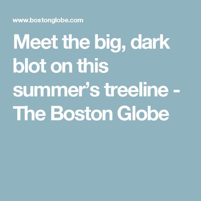 Meet the big, dark blot on this summer's treeline - The Boston Globe