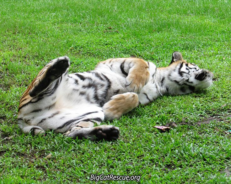 sphynx cat breeders oregon