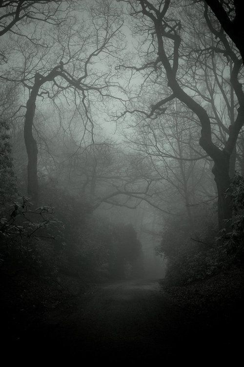 ominousplaces:  The lacertine forest, by mofotographer.