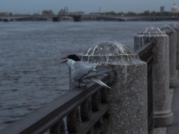 Bird by Виталий Котков on 500px