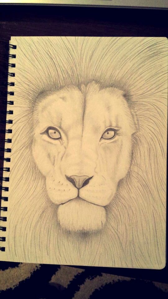 #graphite #lion #drawing