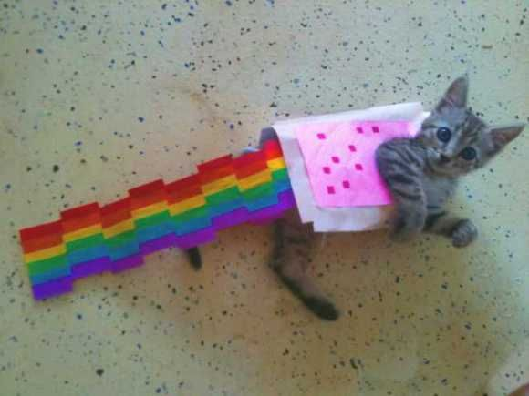Nyan Cat Lives! Nine Cute Real Live Nyan Cats: Cats, Real Life, Halloween Costumes Ideas, The Real, Cute Cat, Cat Costumes, Nyan Cat, Kittens, New Outfit