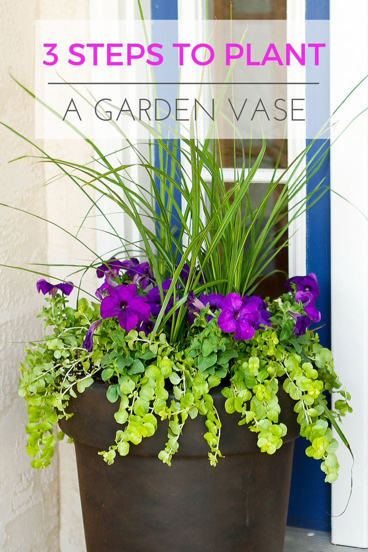 25 best ideas about plants around pool on pinterest for Easy plants to grow in pots outside