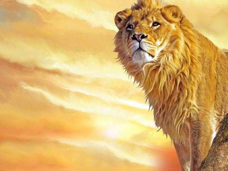 Lejon - skrivbordsbakgrund: http://wallpapic.se/djur/lejon/wallpaper-32414
