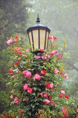 Black lamppost with climbing roses
