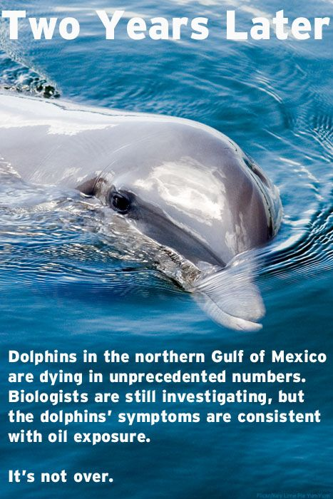 Two years after the start of the BP OIL SPILL, dolphins in the northern Gulf of Mexico are DYING IN UNPRECEDENTED NUMBERS. It's NOT over!!