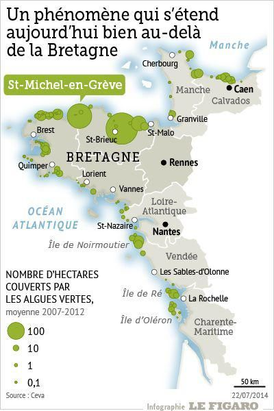 L'algue verte fait son retour sur les côtes bretonnes. En baisse depuis plusieurs années, le volume de cette marée verte, potentiellement dangereuse pour l'homme, devrait augmenter cette année.