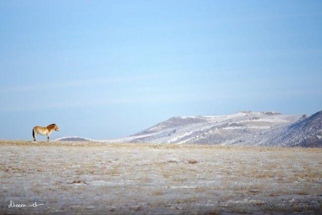 Winter-in-Mongolia2__880