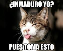 Resultado de imagen para memes de gatos tiernos