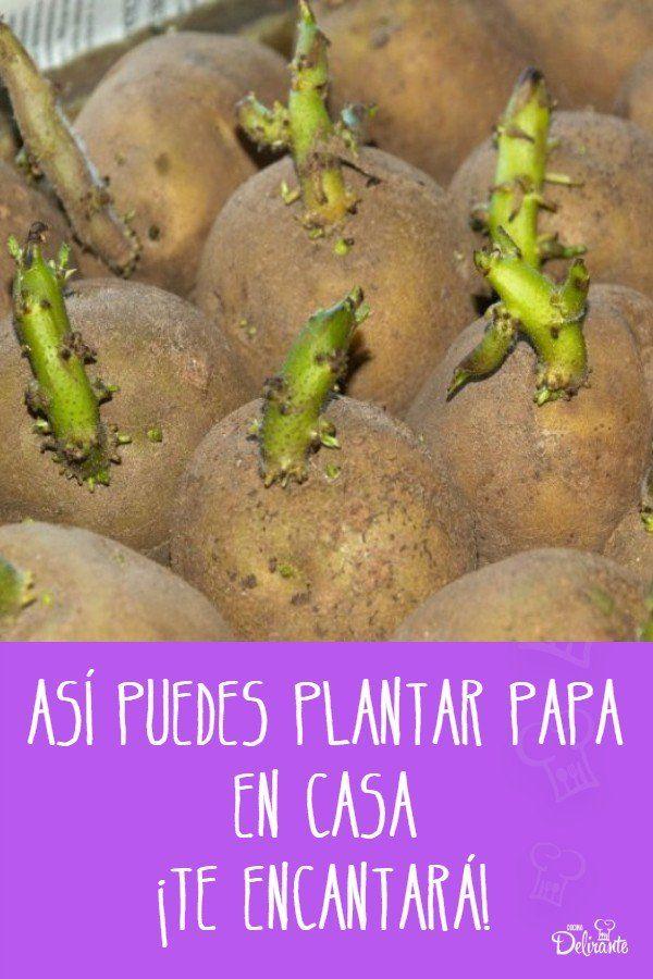 Así puedes plantar papa en casa, ¡te encantará! Eco Garden, Baking, Ethnic Recipes, Plants, Food, Survival, Gardening, Ideas, Gardens
