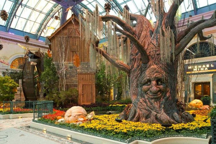 Reviews of Kid-Friendly Attraction | Bellagio Conservatory ...