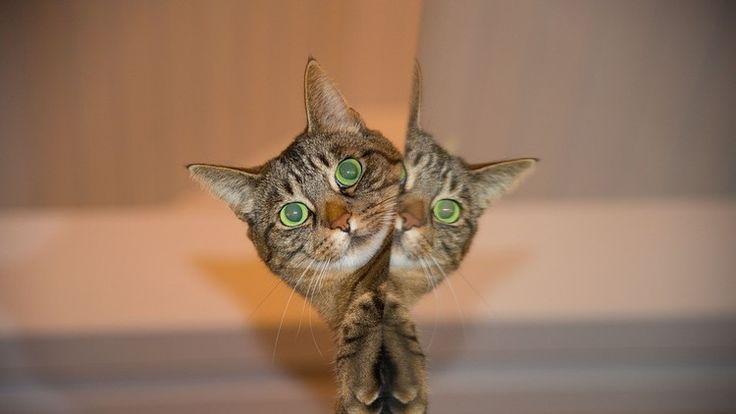 ❝ Científicos logran 'criar' un gato de Schrödinger ❞ ↪ Vía: Entretenimiento y Noticias de Tecnología en proZesa