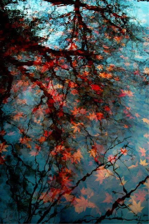 Ross van Gogh; Autumn under water