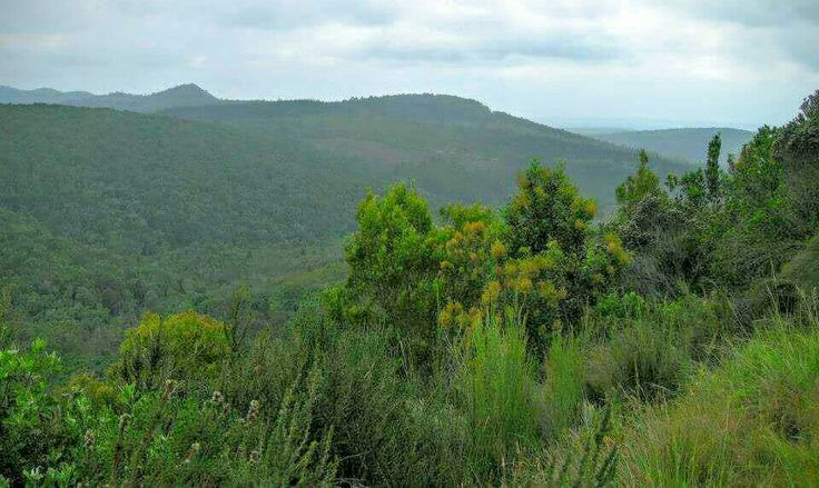 Inland through the Knysna Forest towards the Langkloof.