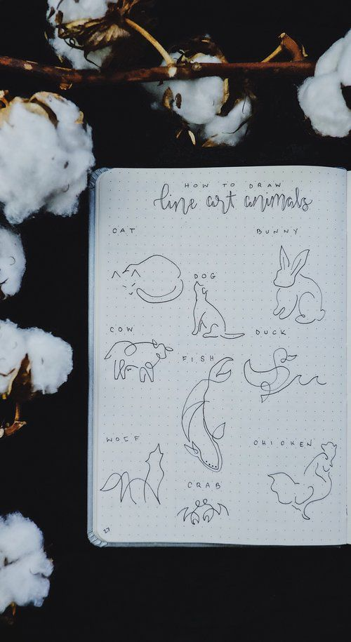 How To Draw Line Art Animals: A One Line Drawing Tutorial – Sarah Althoff