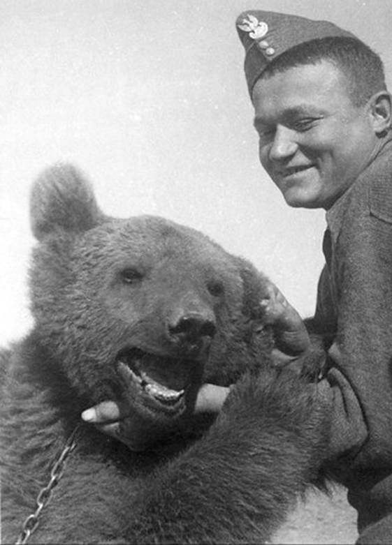 "Another Wojtek the Soldier Bear photo. (Also known as ""Voytek"" depending on the transliteration from the original Polish.)"
