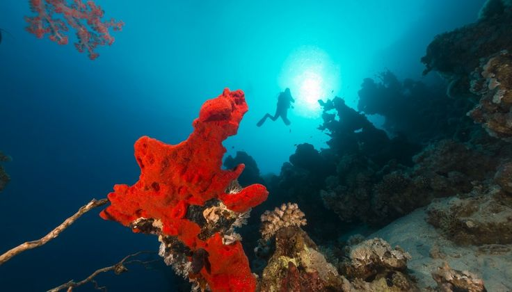 DIVE.in - Free Online Scuba Diving magazine - Join today!