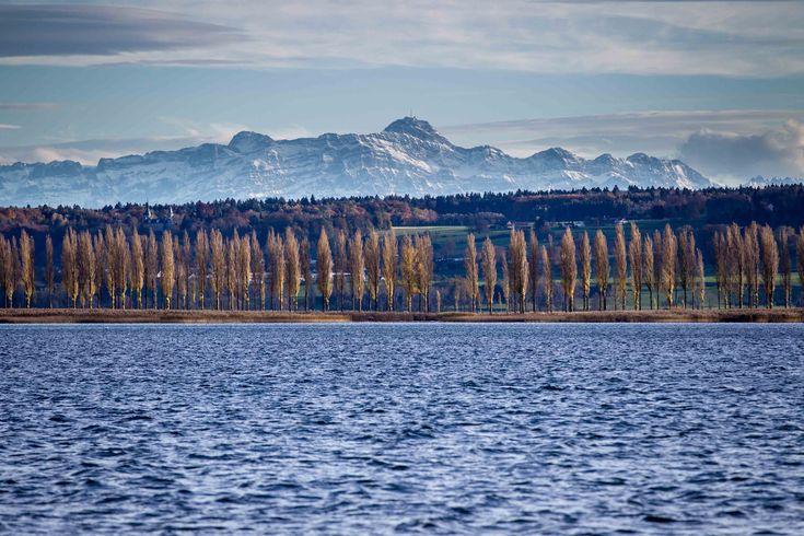 Blick von der Insel Reichenau (Bodensee) auf den Säntis