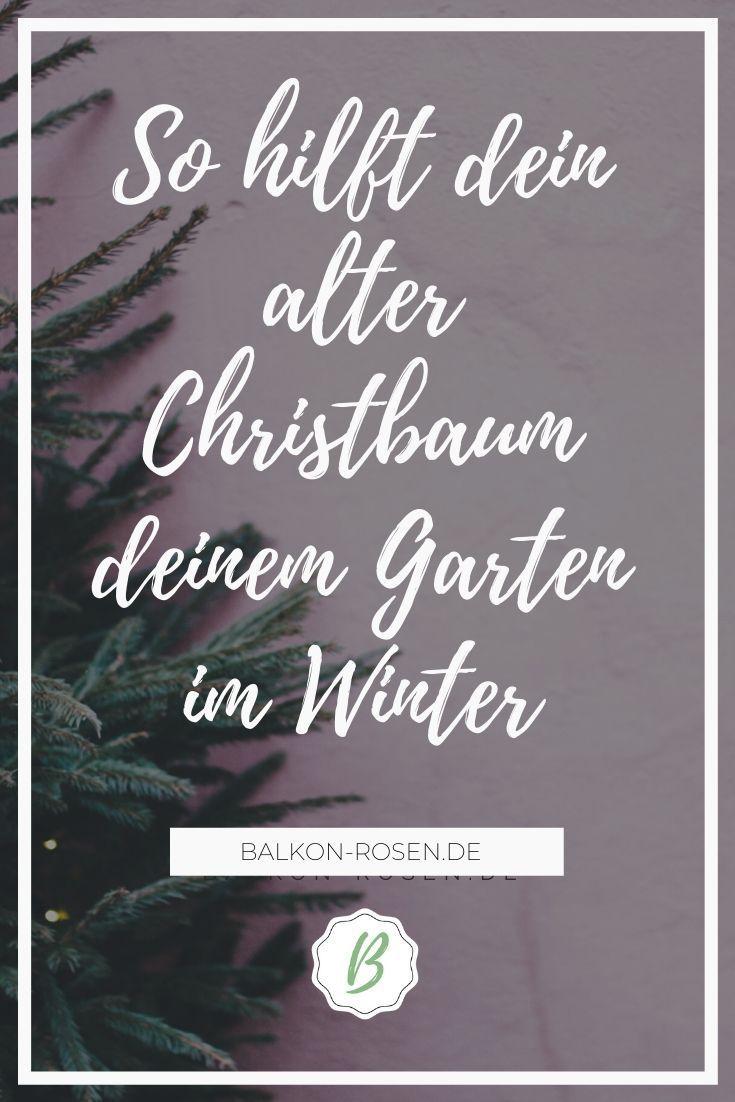Weihnachtsbaum Entsorgen Nutze Ihn Im Garten Balkonrosen Blog Garten Alte Weihnachtsbaume Pflanzen