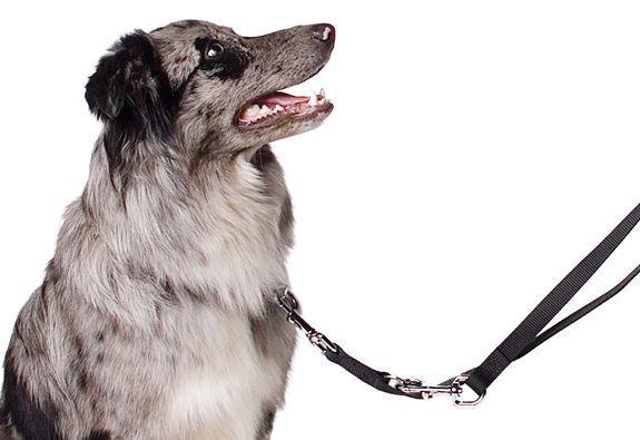 Ancol Multi Way Police Dog Training Lead Handling Lead Black extra long #ancol