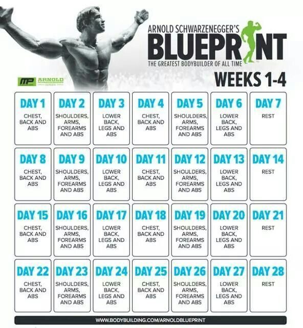 Bulking gym routine 4 day gymtutor 11 best arnold images on workouts circuit and malvernweather Gallery