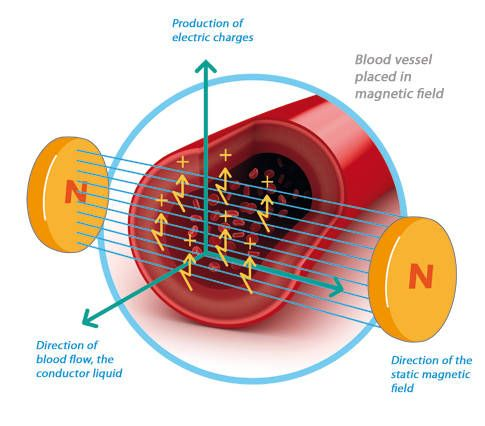 Blood vessel placed in magnetic field... How magnetic therapy works